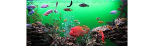 Заказать аквариум