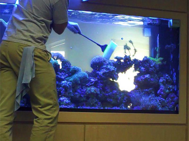 Чистить аквариум в домашних условиях 604